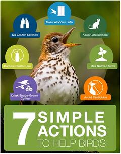 Poster Courtesy of the Cornell Lab of Ornithology