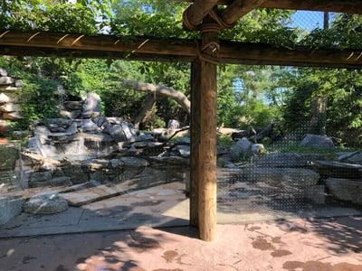 Cougar Cincinnati Zoo