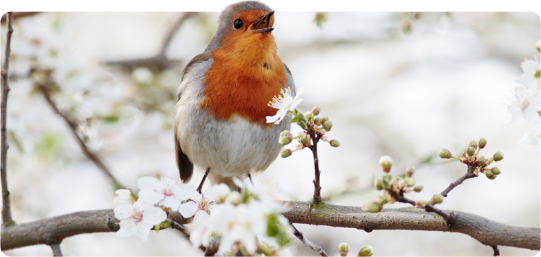 Crisis Bird